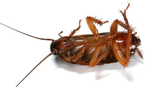 Cockroach macro